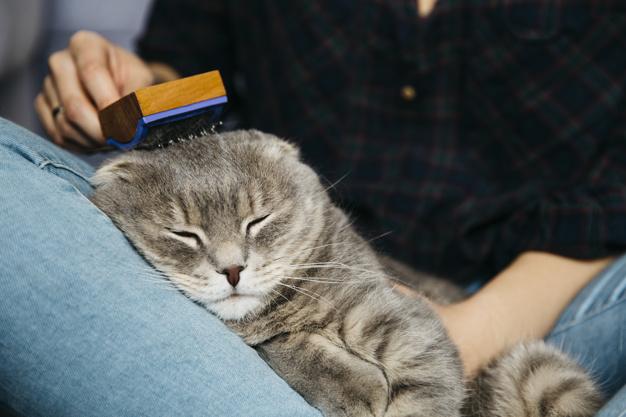 ขนมแมวเลียสำหรับแมว
